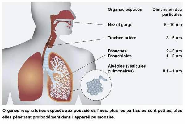 impact des particules fines sur la santé selon leur taille